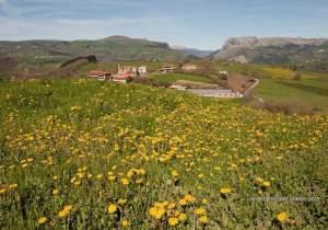 Primavera en Karrantza por Sergio González Ahedo